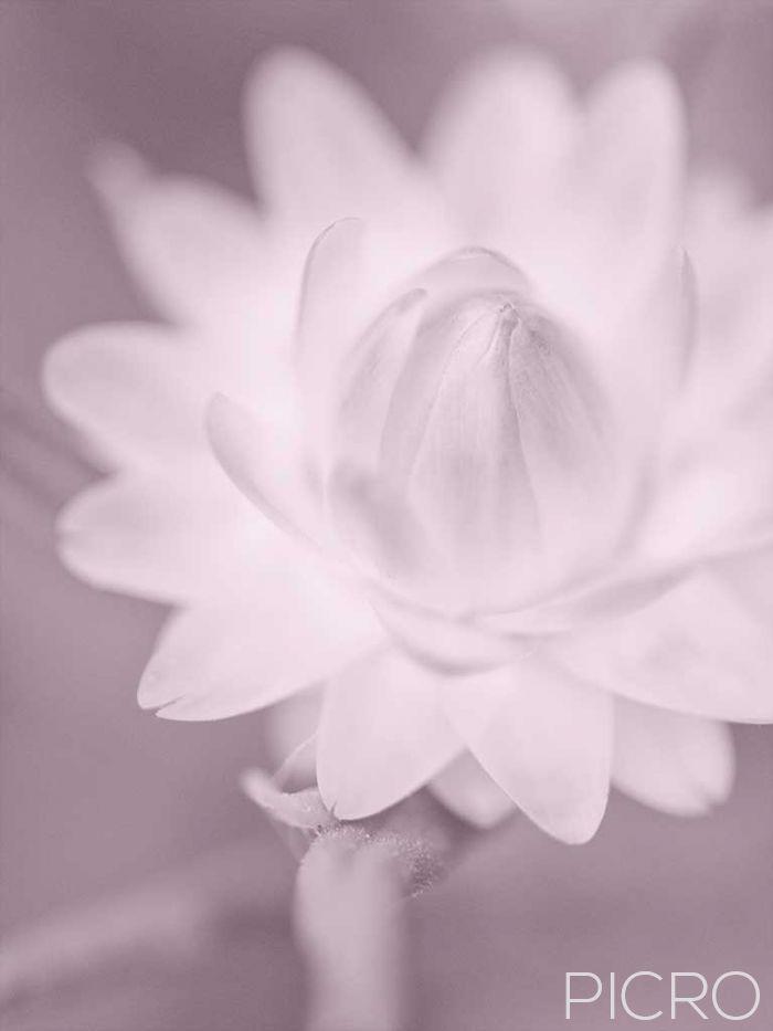 Paper Daisy Blossom - Paper Daisy Blossom