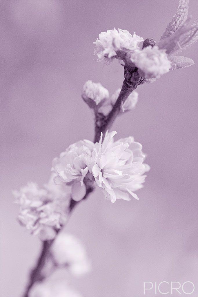 Spring Blossom - Spring Blossom