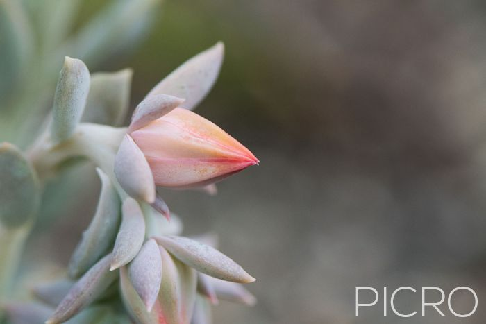 Succulent Bloom - Succulent Bloom
